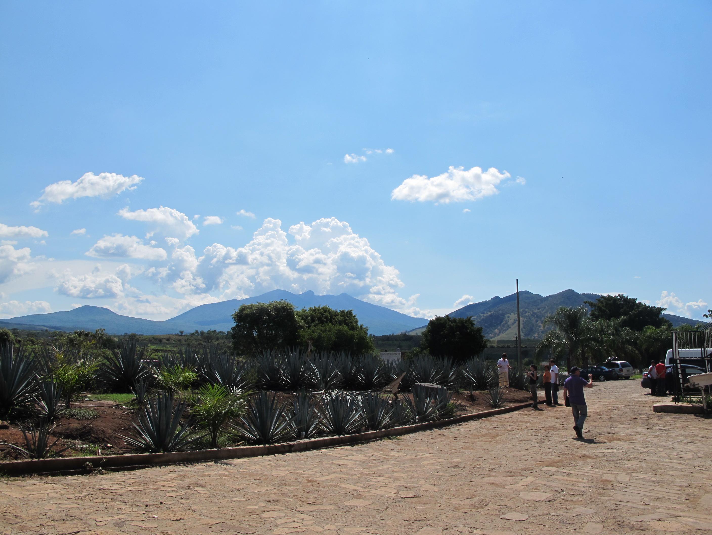 Vue sur la région de Tequila, Jalisco, Mexique