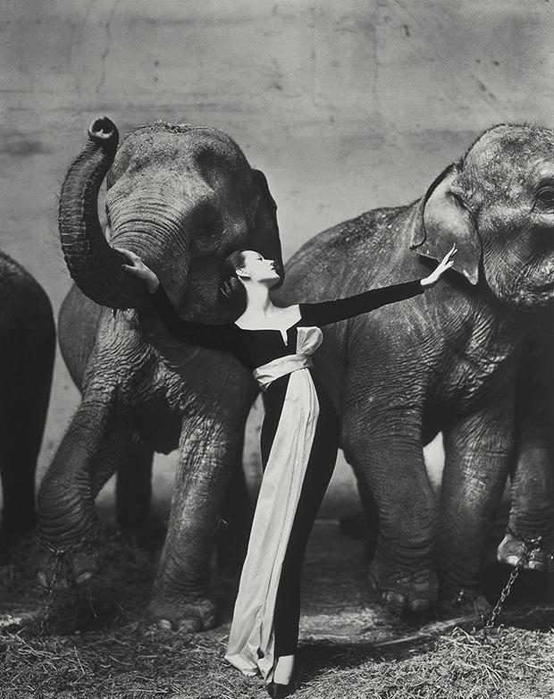 Dovima et les éléphants, photo en noir et blanc emblématique, par Richard Avedon