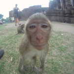 {:fr}Lopburi, le royaume des Singes{:}{:en}Lopburi, kingdom of Monkeys{:}
