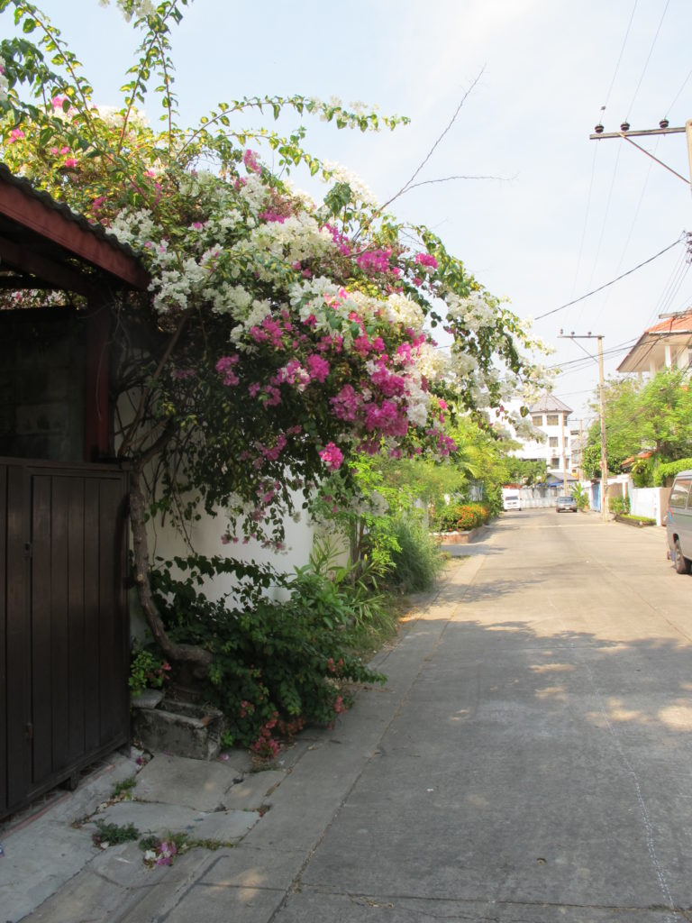 Ruelles de town in town, lad prao 94, avec des bougainvilliers qui fleurissent aux portes des maisons, bangkok